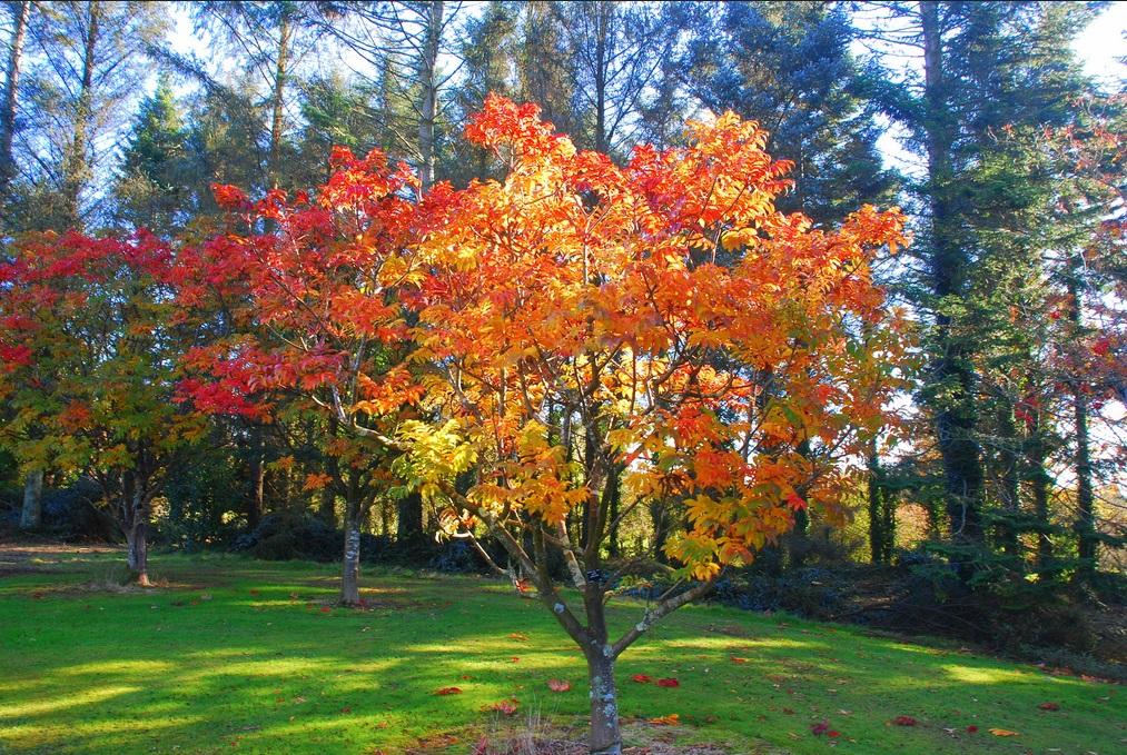 John F Kennedy Arboretum