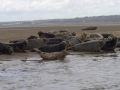 Seals on the sand bar